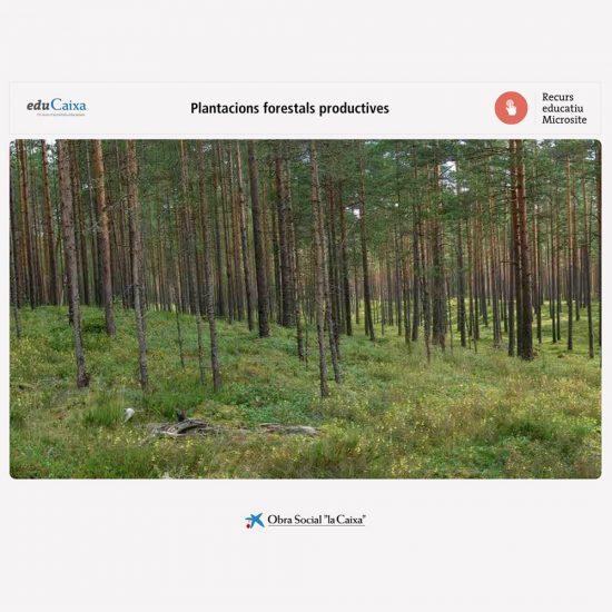 Plantaciones forestales productivas