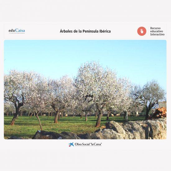 arboles-peninsula-iberica